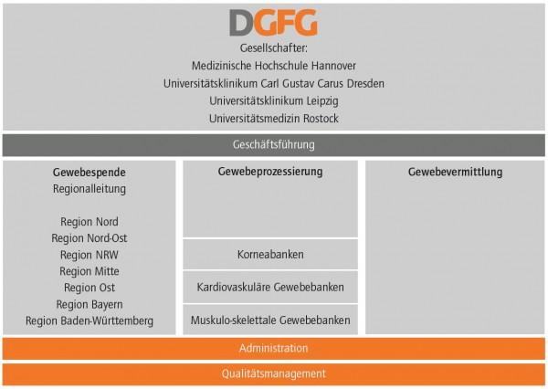 Das Organigramm der DGFG zeigt die Zusammenhänge zwischen Gewebespende, Gewebeprozessierung und Gewebevermittlung eingebettet in die gemeinnützige Gesellschaft.
